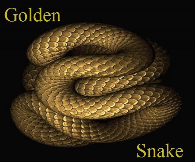 Team Golden Snake Index du Forum
